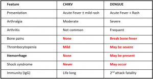 chikungunya and dengue fever comparison