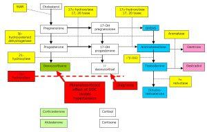 congenital adrenal hyerplasia