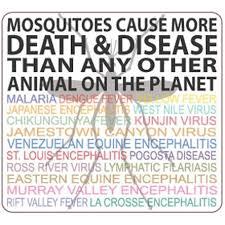 vector for chikungunya